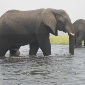 Botswana and the elephants I'll never forget