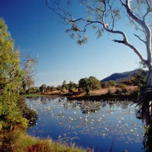A Taste of the Old Territory - Victoria River Region